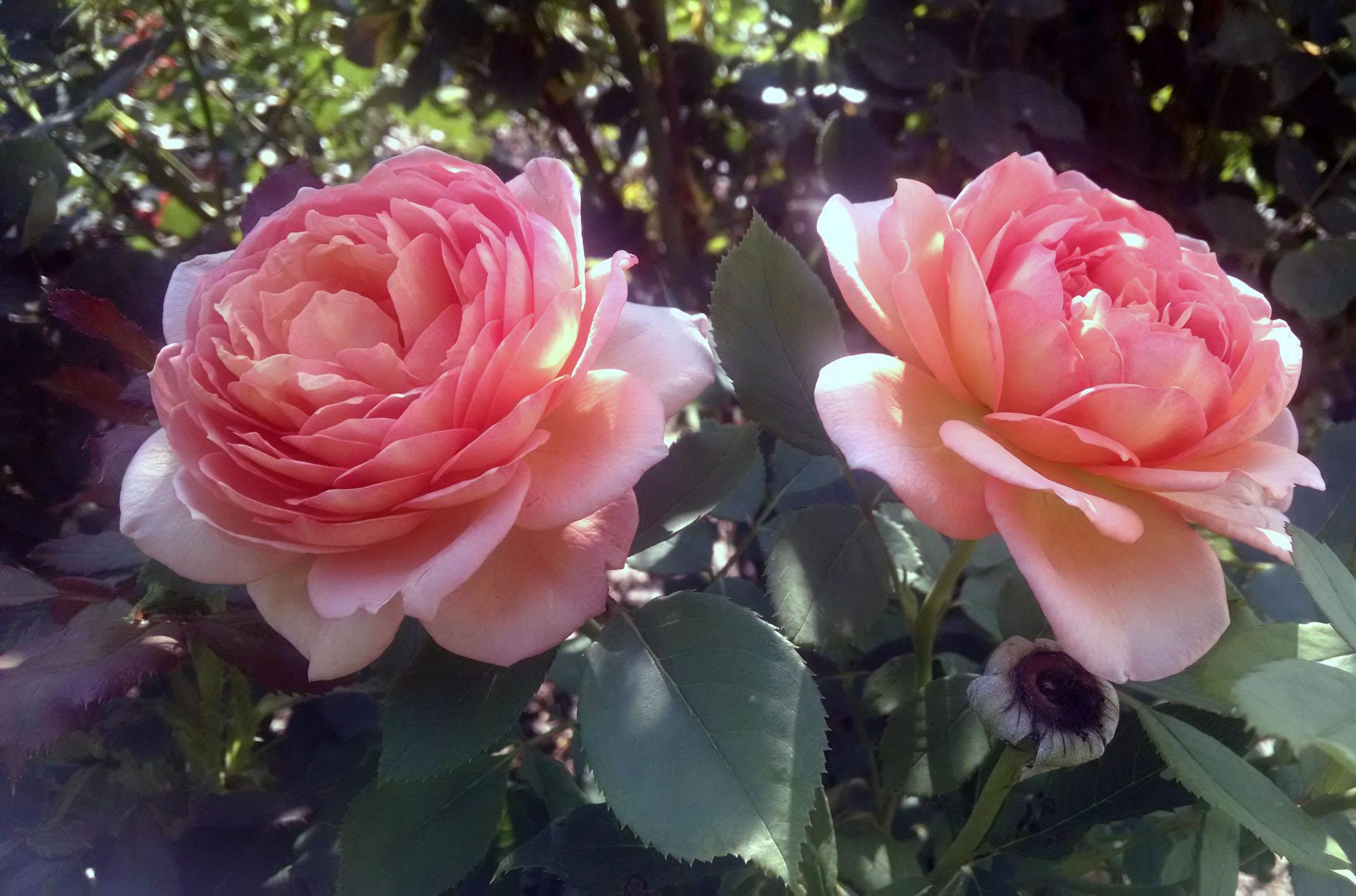 10 top perennials for summer anywhere