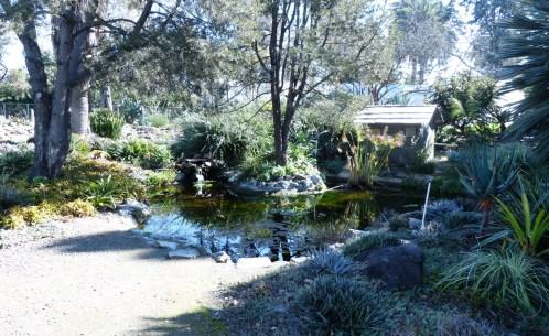 RBG Pond 1024x627 Ruth Bancrofts Succulent Garden