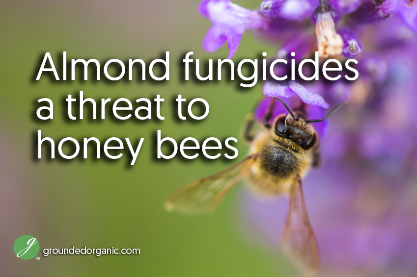 almond fungicide a threat to honey bees