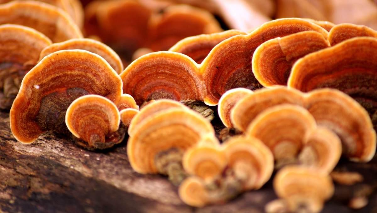 Mushroom Magic?
