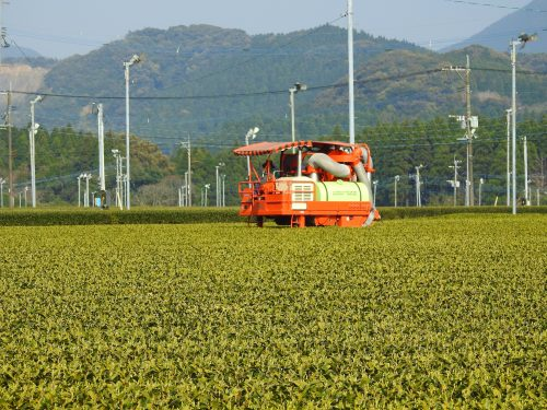 Japan Tea Tour with Tea Master, Bruce Richardson Part 2