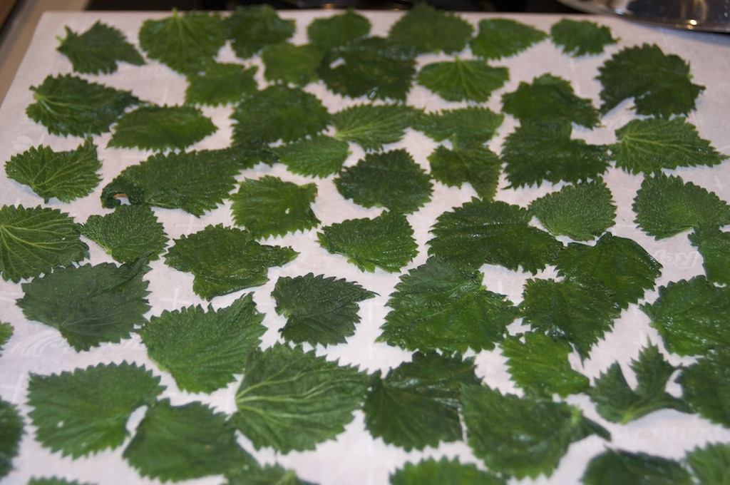 Crispy Nettle Leaves