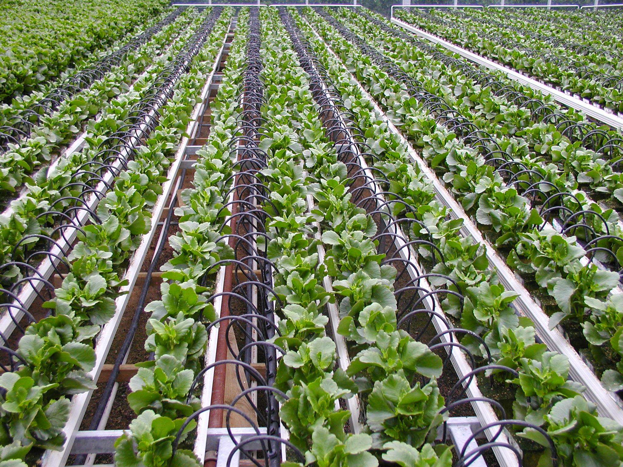Raised Garden Yield