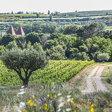 Vue du Moulin de Lène, domaine viticole Frayssinet à Magalas