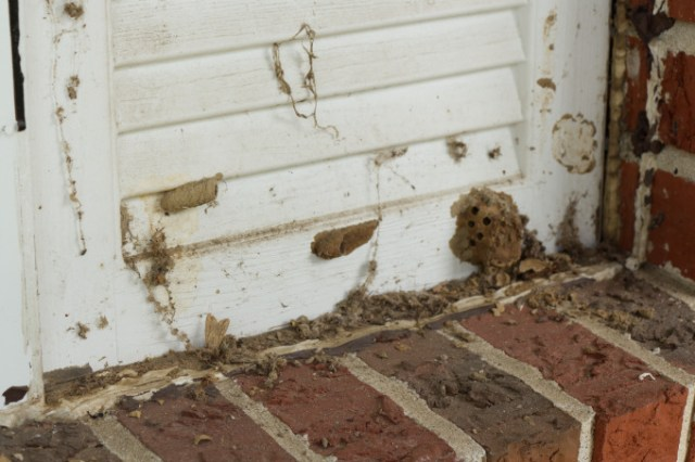 Before cleaning off wasp nests under porch shutters
