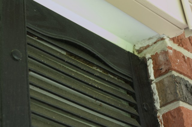 Wasp nest seen under original porch shutters