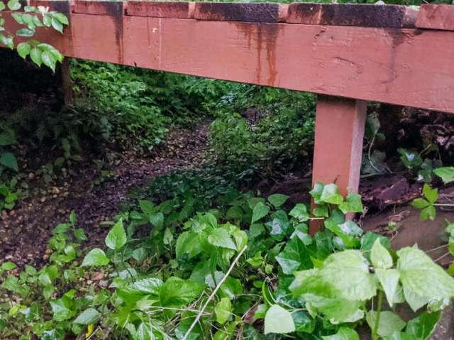 Old bridge footings washing out