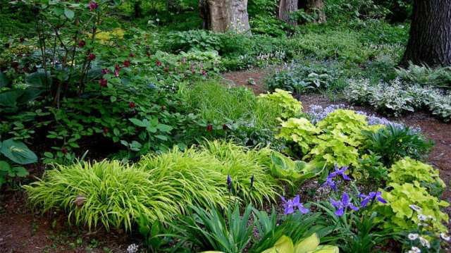Woodland garden inspo