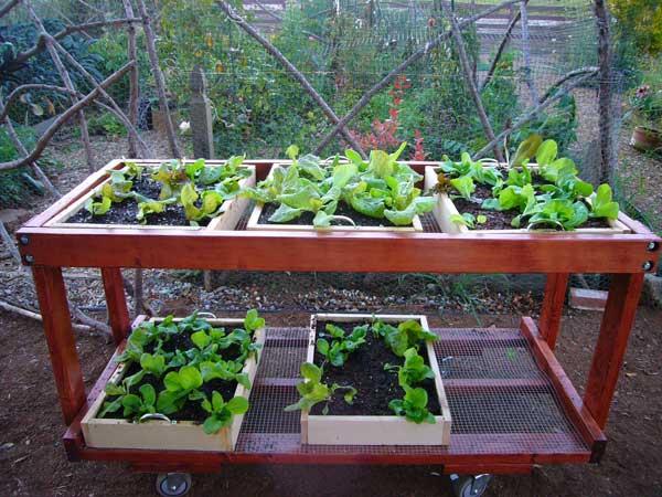 Vegetable Garden Box Height
