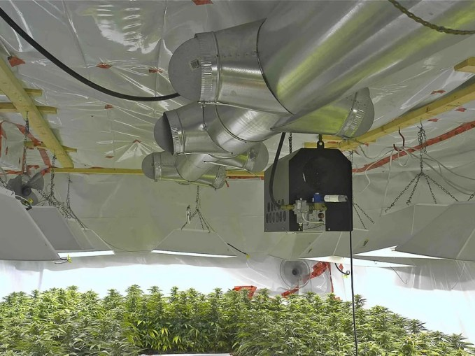 get grow room and cannabis seeds tips