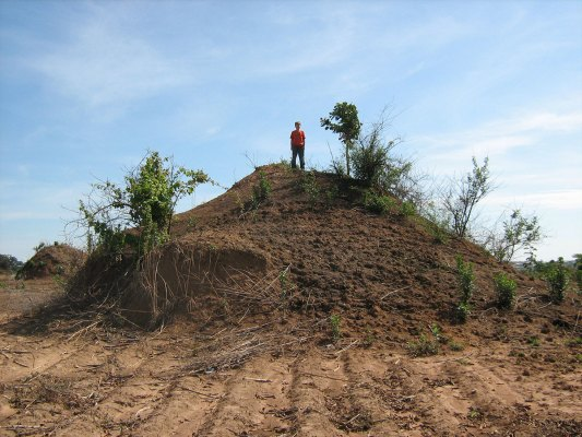 A large anthill in Zambia