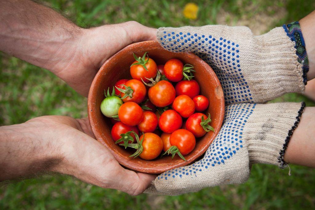 sharing-tomato