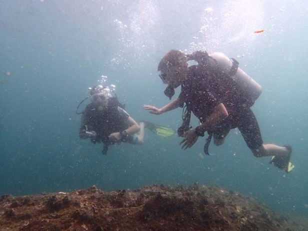 Christmas day dive