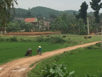 Paddy fields surrounding Phong Nha in Vietnam
