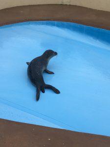 baby seals.