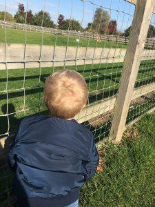 watching the alpaca