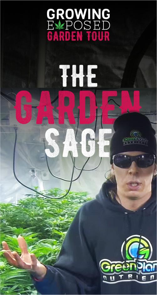 A Tour Of The Garden Sage's Garden