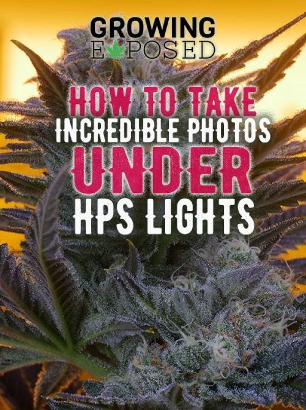 marijuana photo, greenplanet nutrients, growing exposed, weed, cannabis, method seven