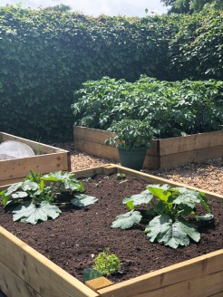potatoes-and-courgettes