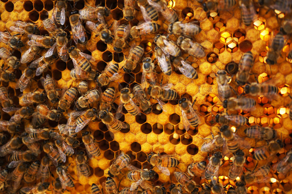 Growing Home Backyard Beekeeping