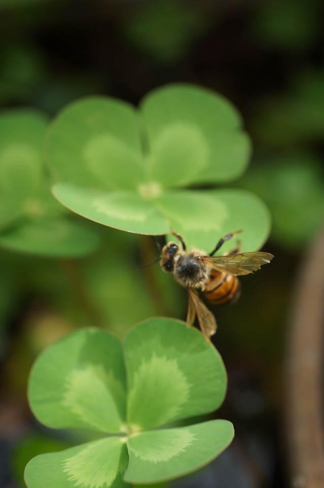 Backyard Beekeeping | Urban Homesteading | Growing Home