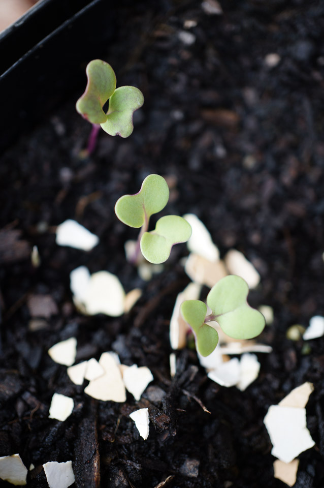 Raising Seedlings | Dirt to Dinner | Growing Home