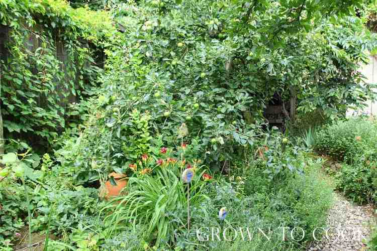 edible forest garden in july