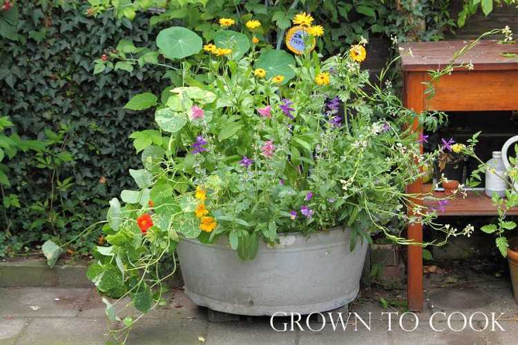 Edible flowers grown in pot