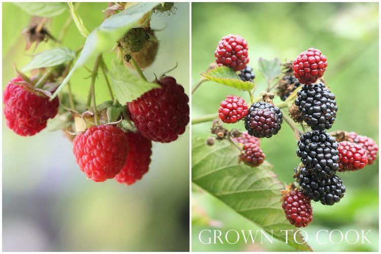 autumn raspberries and blackberries