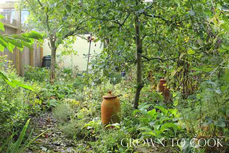 edible forest garden in october