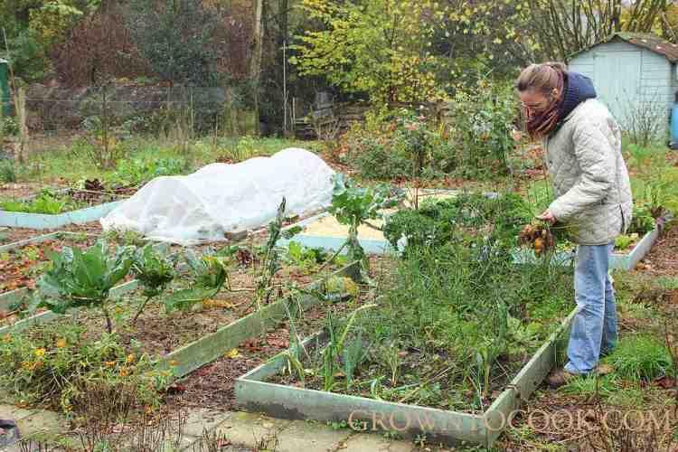 vegetable garden in november