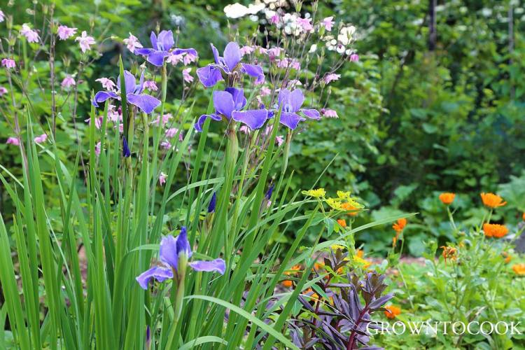 perennial cut flower border