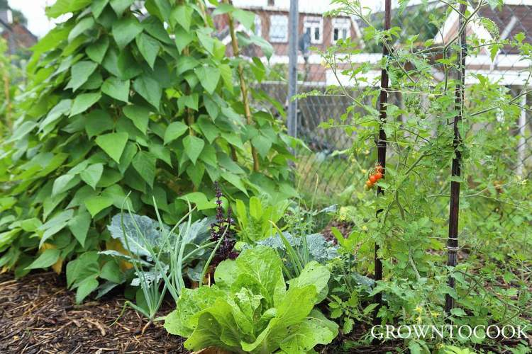 polyculture of annual vegetables