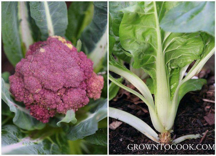 purple cauliflower and chard