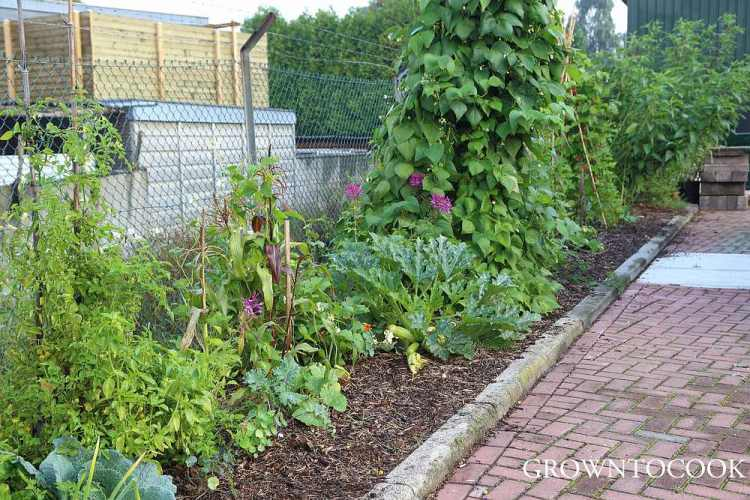 annual vegetable polyculture