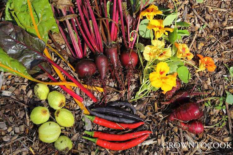 harvest from the garden connect plot