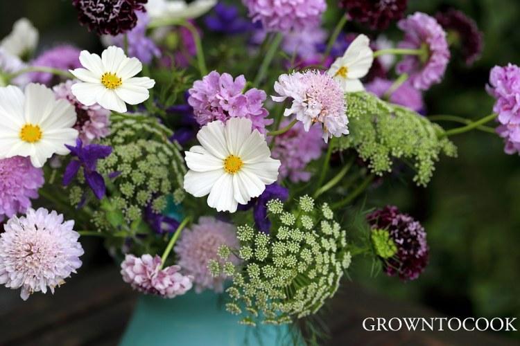 annual cut flowers