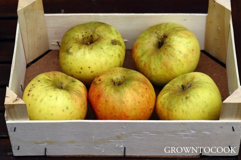apple Glorie Van Holland