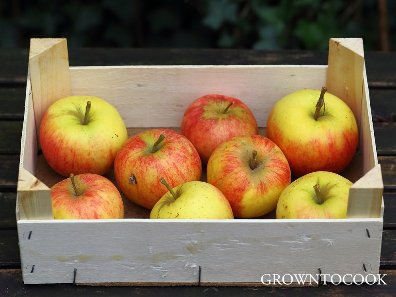 apple Elstar
