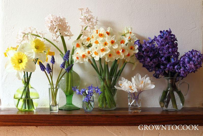 spring bulbs cut flowers