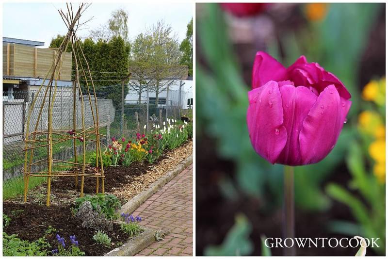 community garden hengelo