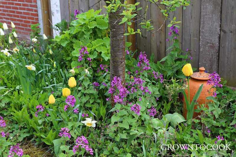 edible forest garden april