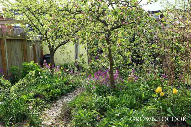 edible forest garden in april