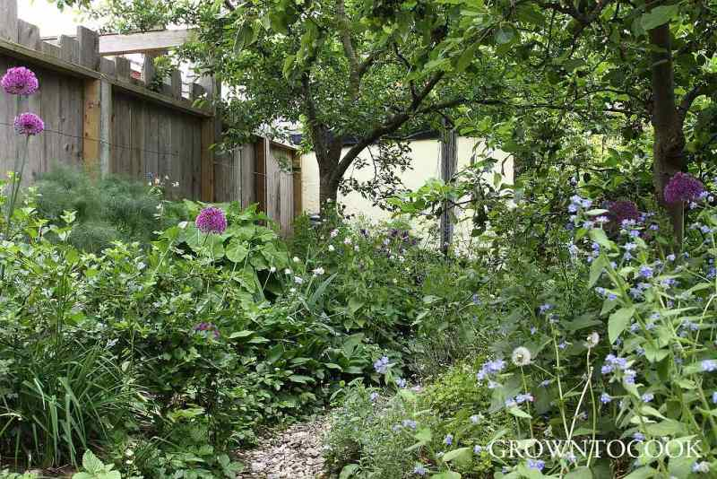 edible forest garden in may