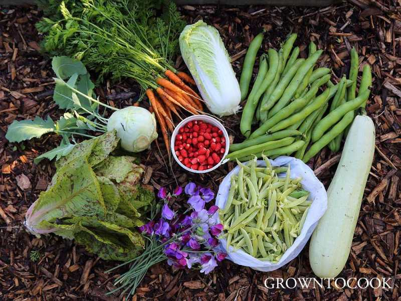 July harvest from the allotment