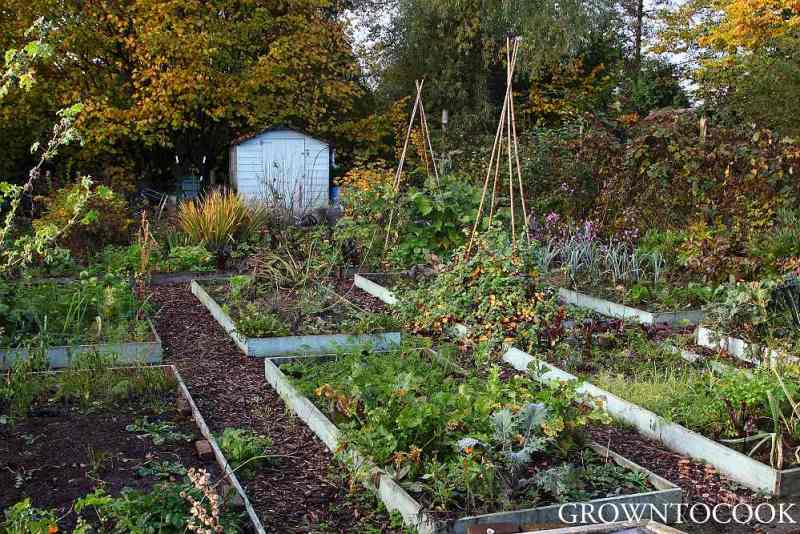 kitchen garden in october