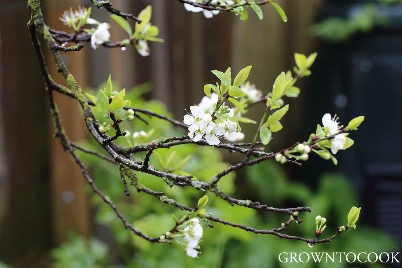 mirabel blossom