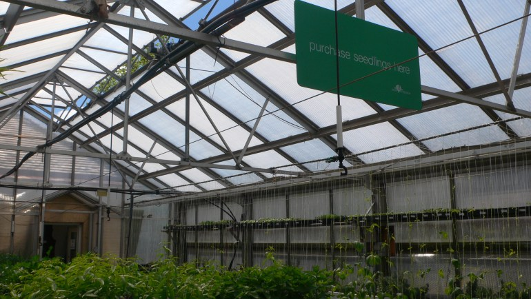 Grow Pittsburgh Seedling Sale at The Frick Pittsburgh Greenhouse