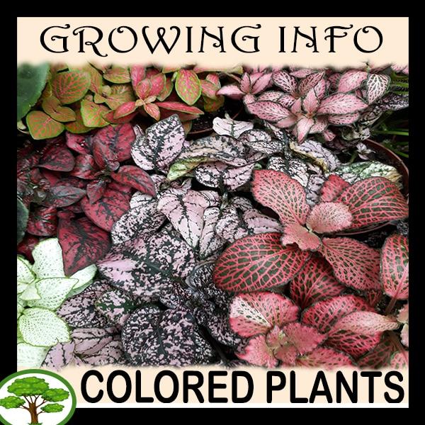 Colored plants Leaf color