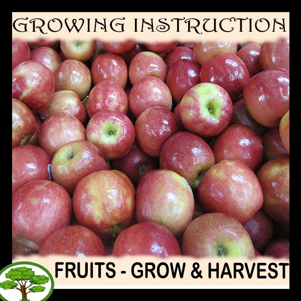 Fruits - Growing and harvest